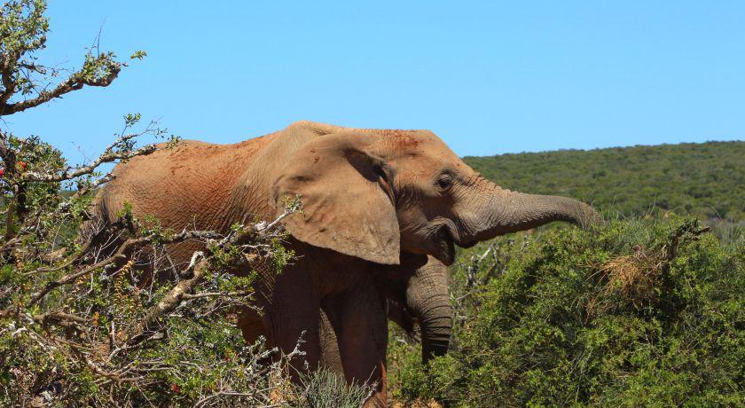 Addo Elephant National Park | Wanderlust Movement