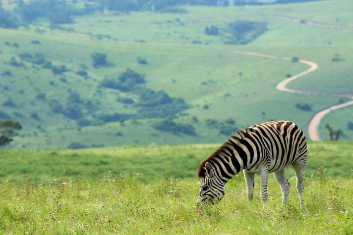 Zebra at Lake Eland | Wanderlust Movement