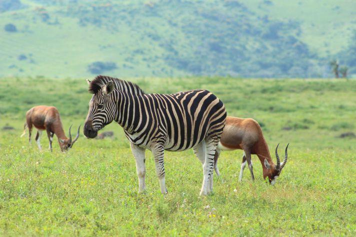 Sad Zebra at Lake Eland | Wanderlust Movement