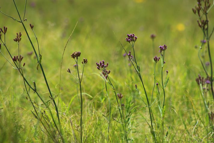 Flowers in Lake Eland | Wanderlust Movement