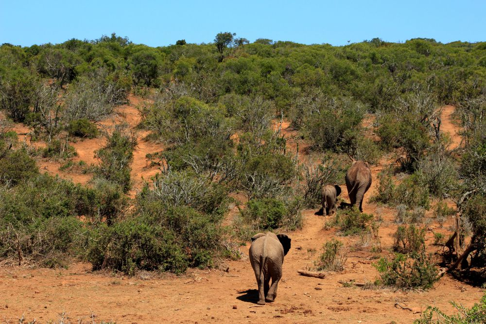 Addo Elephant National Park | Wanderlust Movement