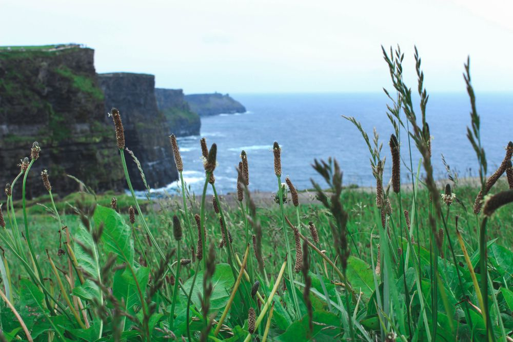 Nature at the Cliffs of Moher | Wanderlust Movement