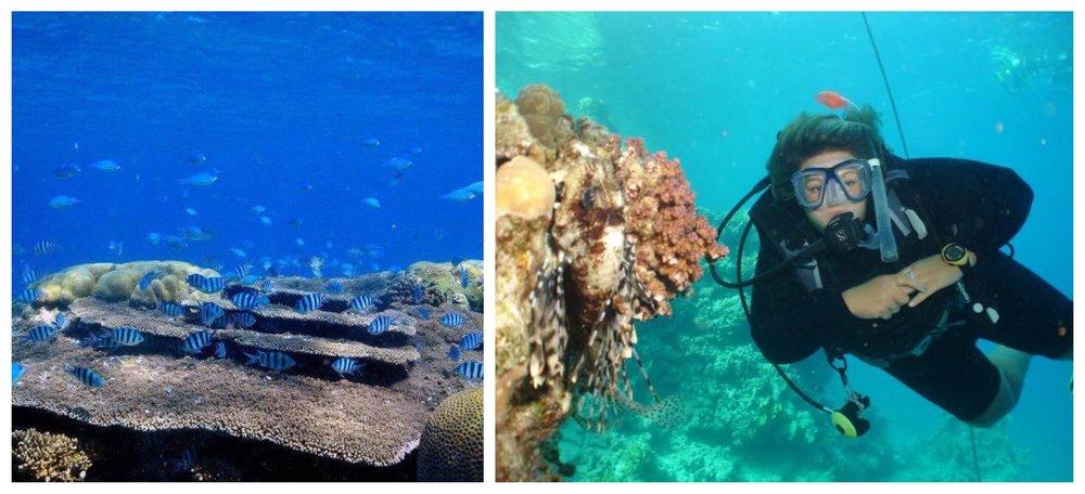 Plus size scuba diver and coral reef scene