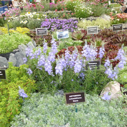 Wormwood or whatever: botanical Latin comes in handy at plant shows.