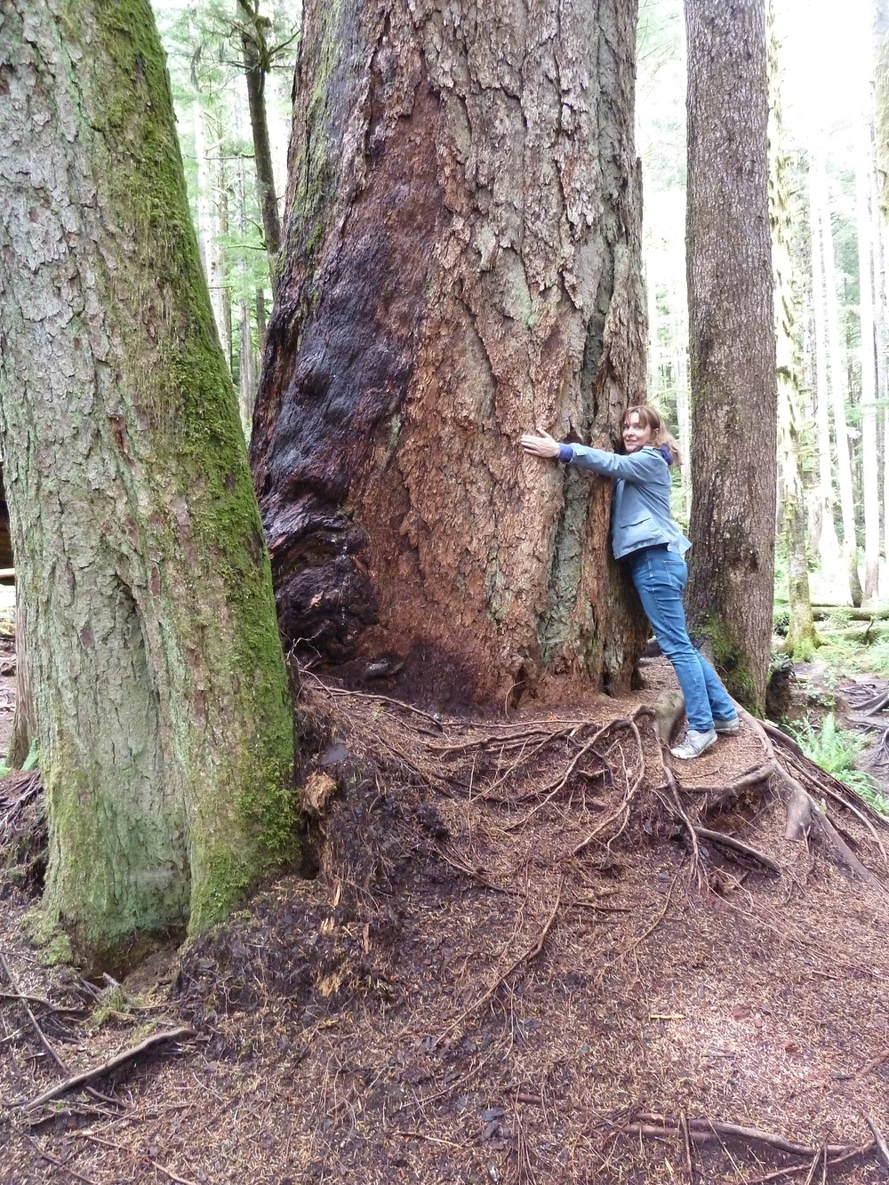 Me, hugging a Very Large Tree in old growth temperate rainforest near Port Renfrew, Vancouver Island.