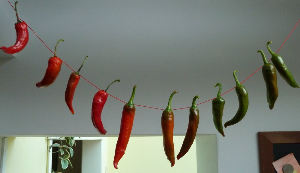 Get growing now and you could be hanging ristras of chillies all over your kitchen by autumn...