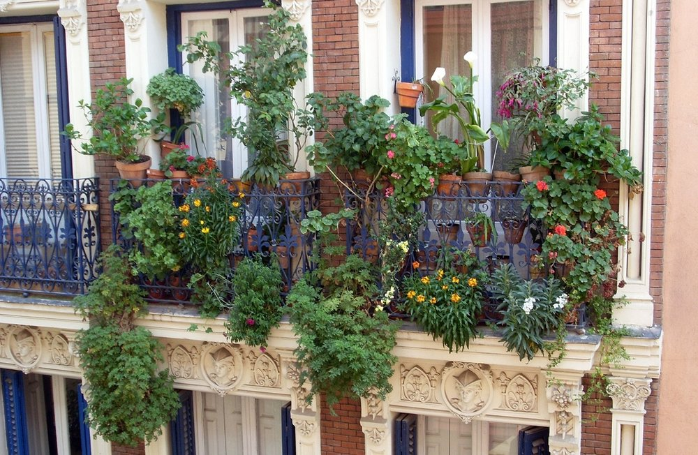 Pot luck: balconies are inbetween spaces where plants can thrive. (This isn't Alice Vincent's balcony by the way, but one I am sure we both covet...) Photograph by Abi Skipp on Flickr