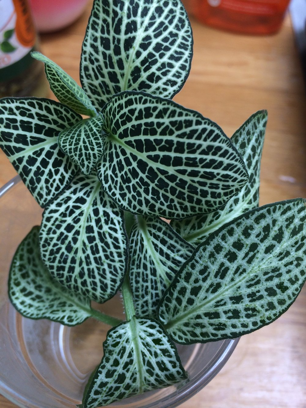 Where To Buy Houseplants In The Us Jane Perrone