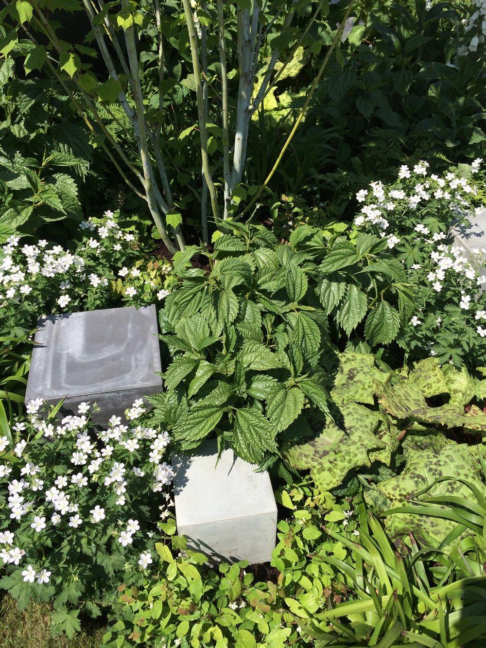 Plants getting cosy in Robert Barker's  Skin Deep garden .