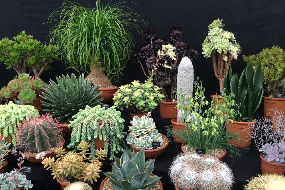 Ottershaw Cactus Nursery's display in the Great Pavilion. Drool...
