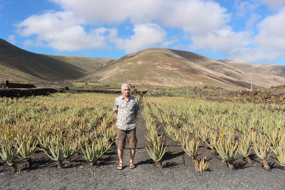 Colin in a plantation of Aloe vera growing in Lanzarote. Photograph: Marjorie Thorburn