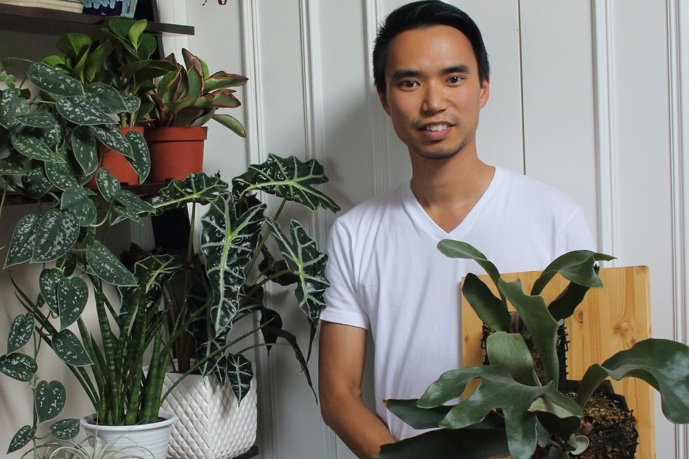 Photograph: House Plant Journal/Darryl Cheng.