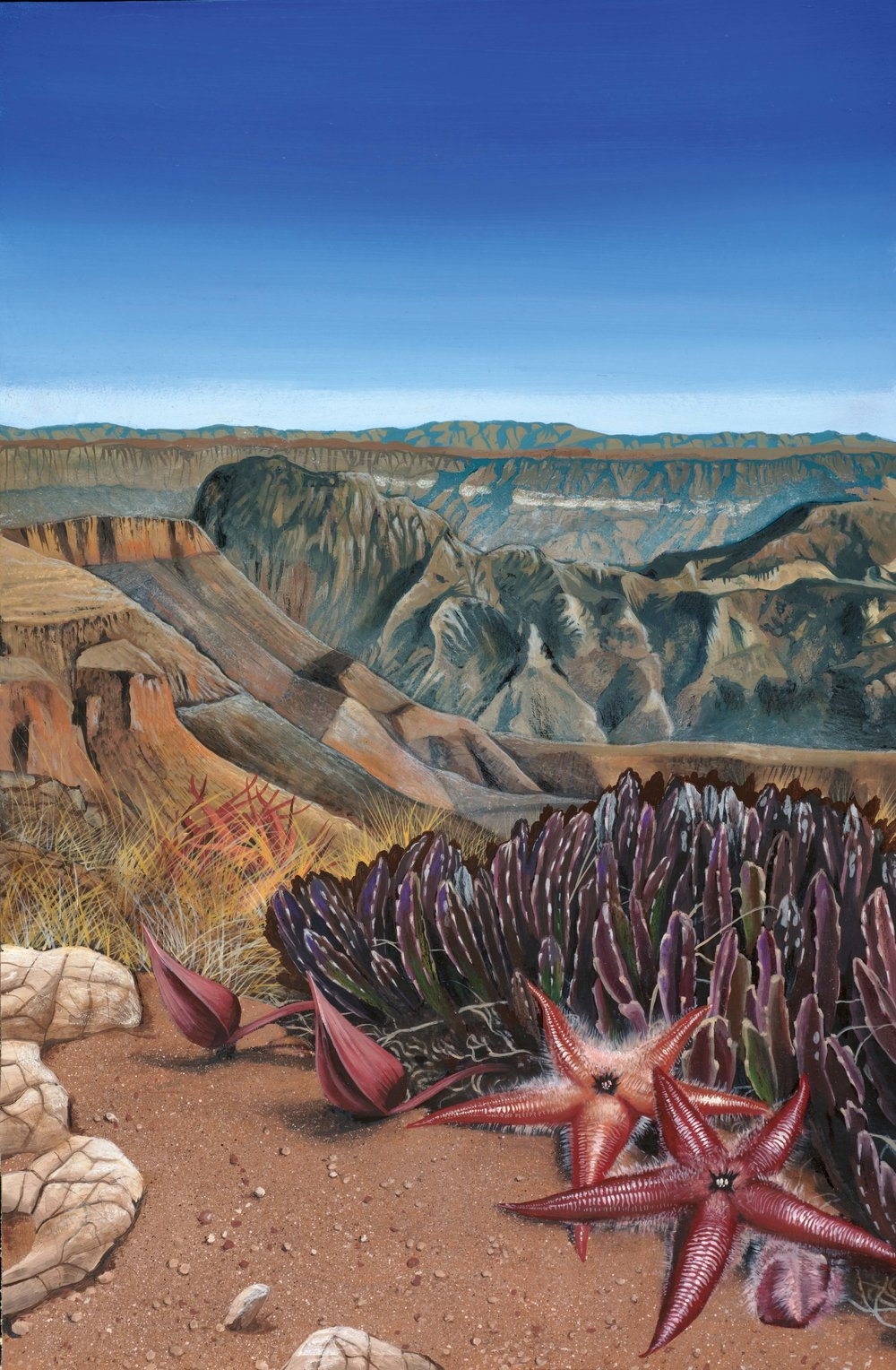 Starfish flowers ( Stapelia gariepensis )   growing on dry mountains near the border between South Africa and Namibia. Painting by Chris Thorogood.