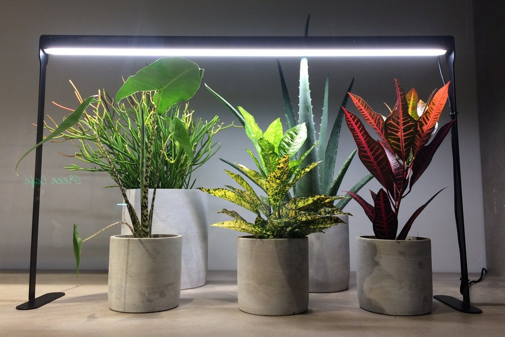 Grow lights illuminated houseplants on display at the  Waterdrinker  trade centre in the Netherlands. Photograph: Jane Perrone