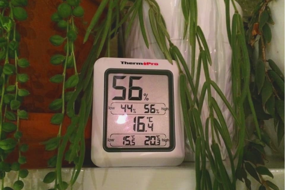A humidity meter or hygrometer is a useful tool for checking conditions around your houseplants, especially in winter. Photograph: Jane Perrone