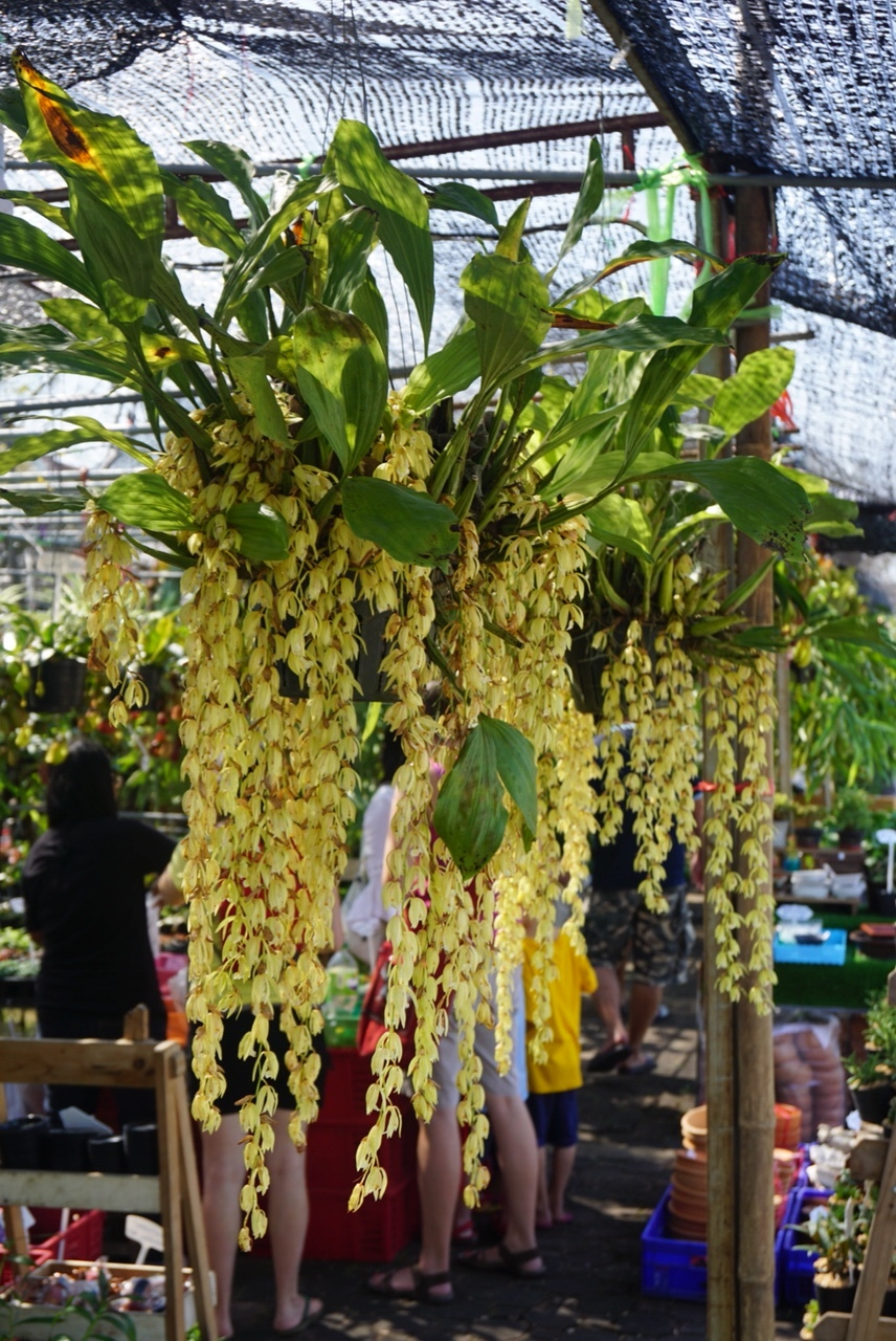 Orchids on display in Thailand
