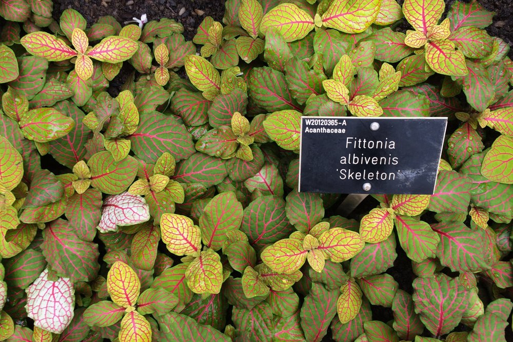 Latin names help gardeners identify plants and avoid the confusion that common names can bring. Photograph: Jane Perrone