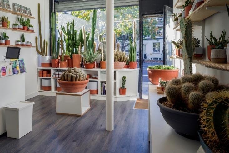 Prick cactus boutique in London.