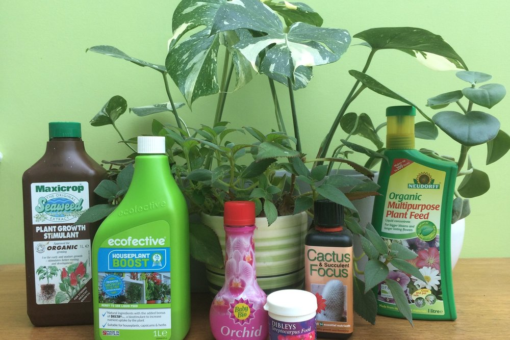 A selection of some of the houseplant fertilisers I have tried on my plants. Photograph: Jane Perrone.