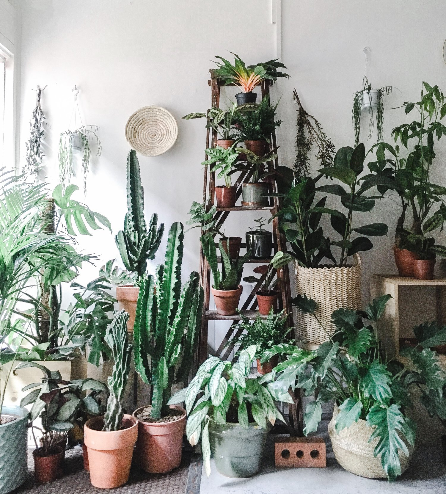 Where To Buy Houseplants In The Uk Jane Perrone