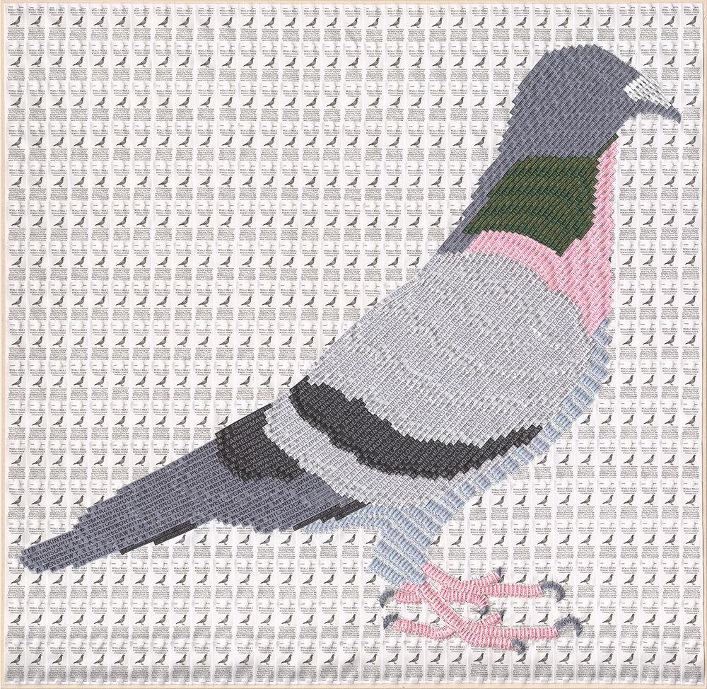 Joy Pitts 2015 Homing pigeon .jpg