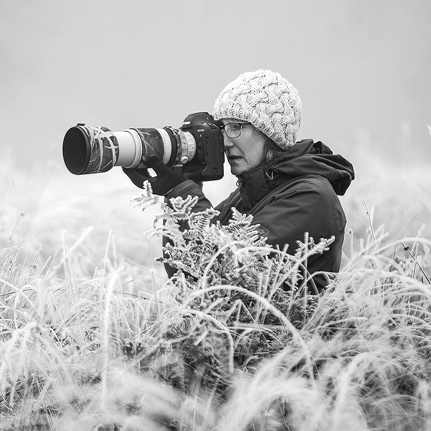 Jayne Bond Nature & Pet Photography. Commissions, Social, Collaborations.