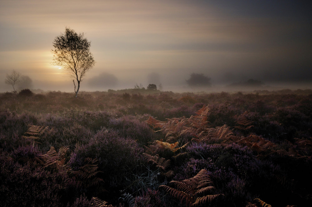 Westleton Heath - Ian thorne - In Support of The Wildlife Trusts