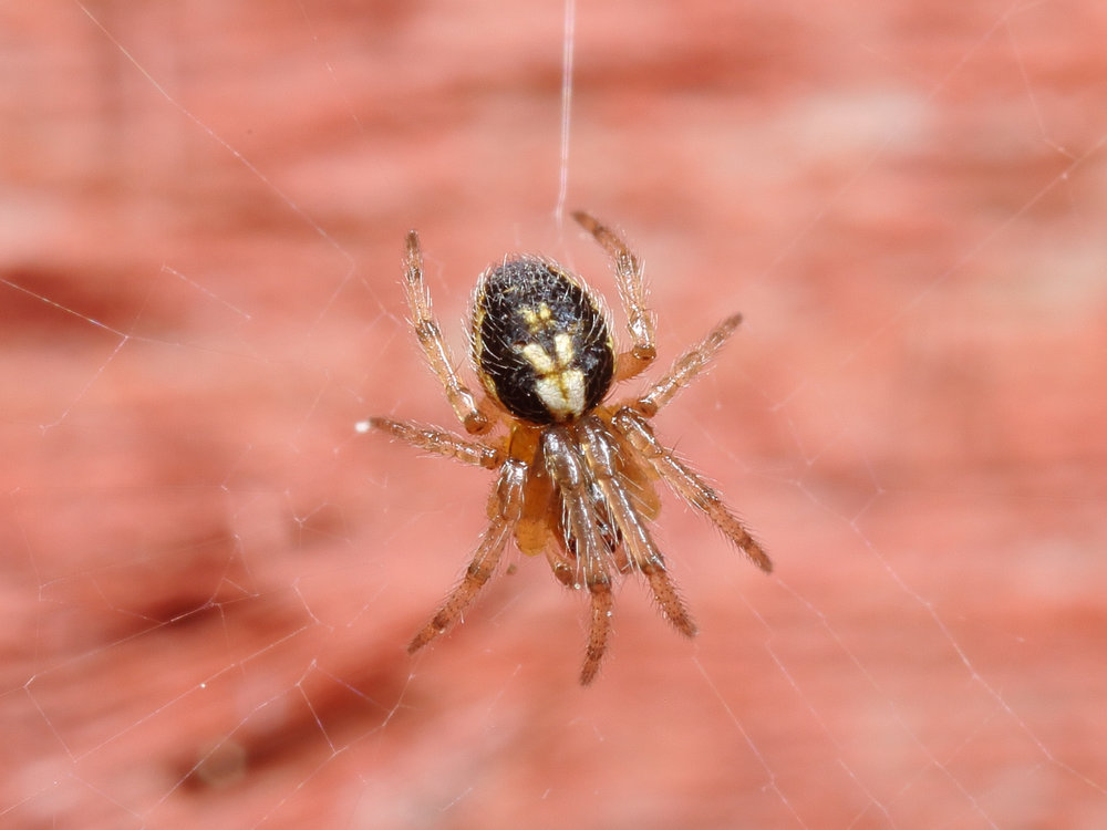 Scotland Winner - Missing Sector Orb Weaver - John Wilkie - In Support of Help for Heroes