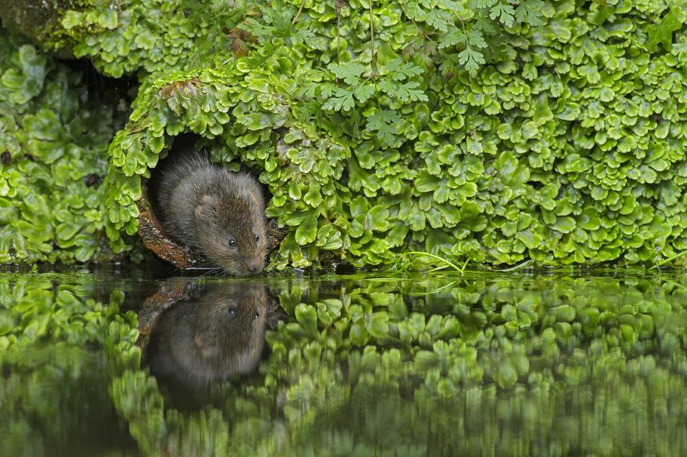 Waterlife007.jpg