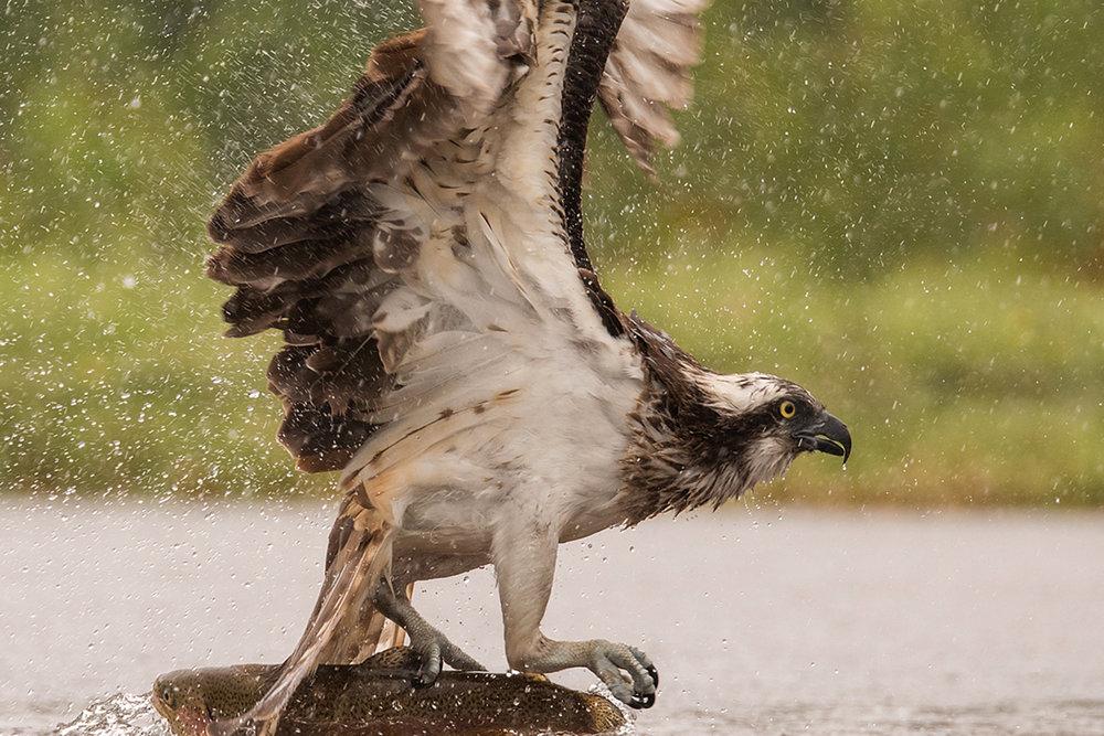 Birdlife -