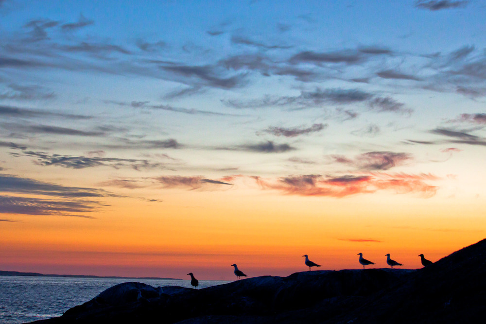 Seagull Silhouettes