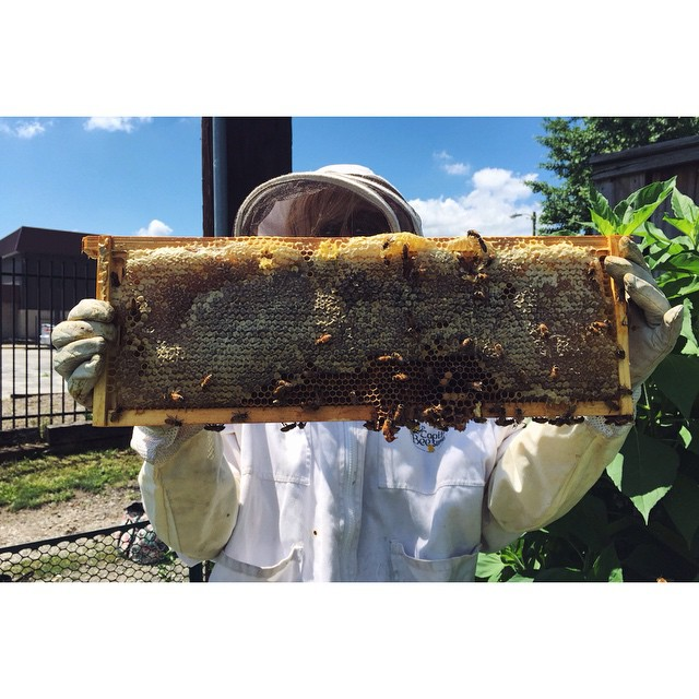Doesn't get much better. #beepublic #savethebees #urbanbeekeeping