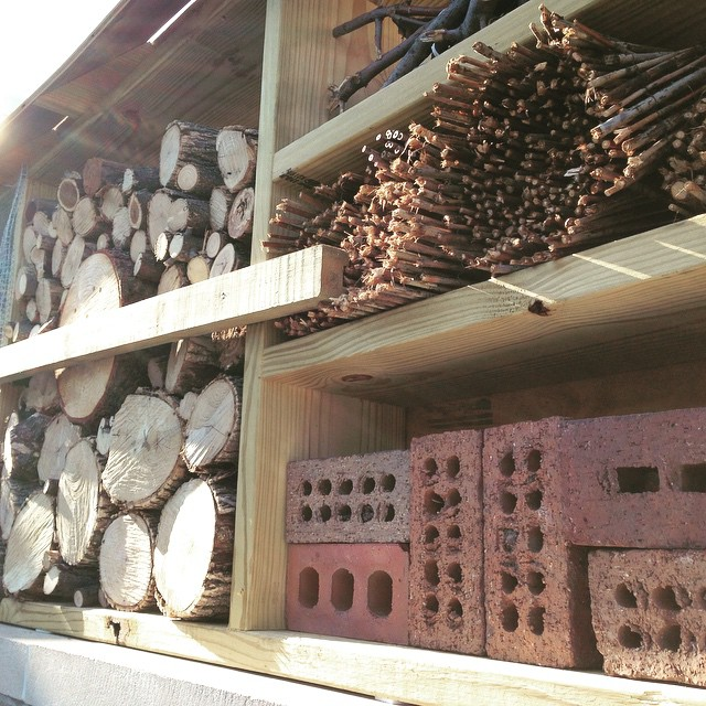 Got to check out the newly installed insect hotel at @butlerlabschool earlier this morning. Solitary bees and other bugs will make their home right next to the front entrance of the school. What a great way to engage kids and draw attention to native pollinators! (at The IPS/Butler University Laboratory School)