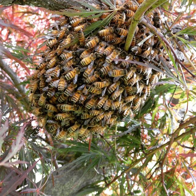 Itsy-bitsy, teeny-weeny swarm. (at Brookside Park)