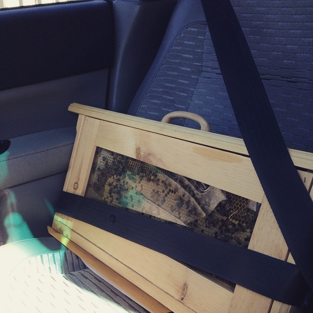 Bees is my copilot. (at Indianapolis Jewish Community Relations Council)