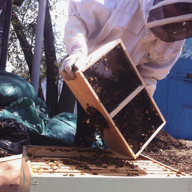 #beepublic #beekeeping @publicgreens  (at Public Greens: Urban Kitchen with a Mission)