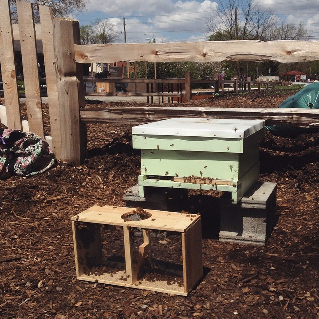 Beehive set up at @publicgreens was a success! The last of three installs today and no stings #knockonwood #beepublic (at Public Greens: Urban Kitchen with a Mission)