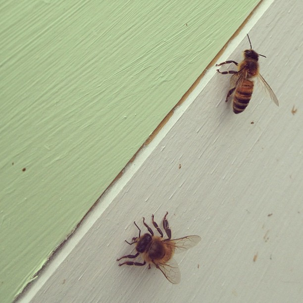 Two bee two bee two. (at Growing Places Indy Slow Food Garden at Cottage Home)