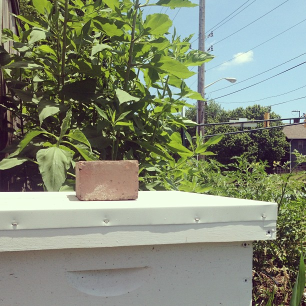 Your friendly neighborhood bee hive. (at Growing Places Indy Slow Food Garden at Cottage Home)