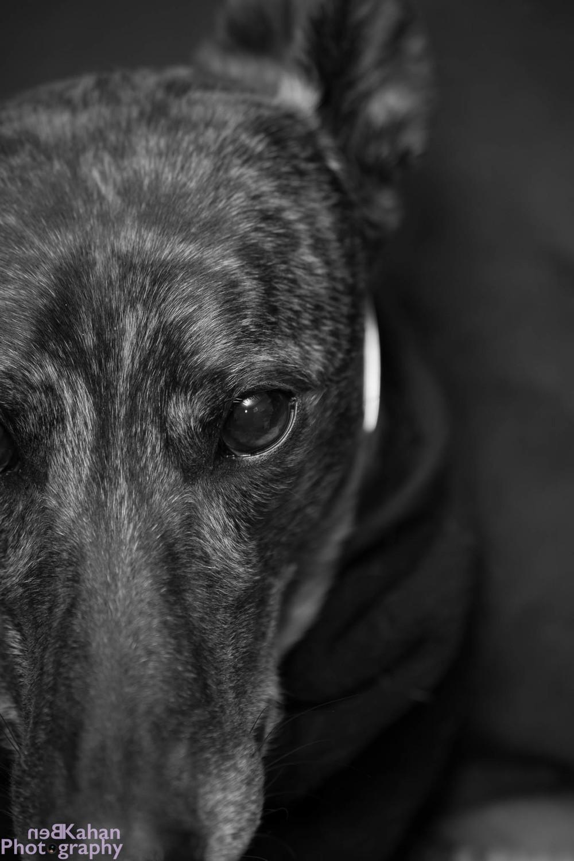 BKP-portrait-animal-dog-photography.jpg
