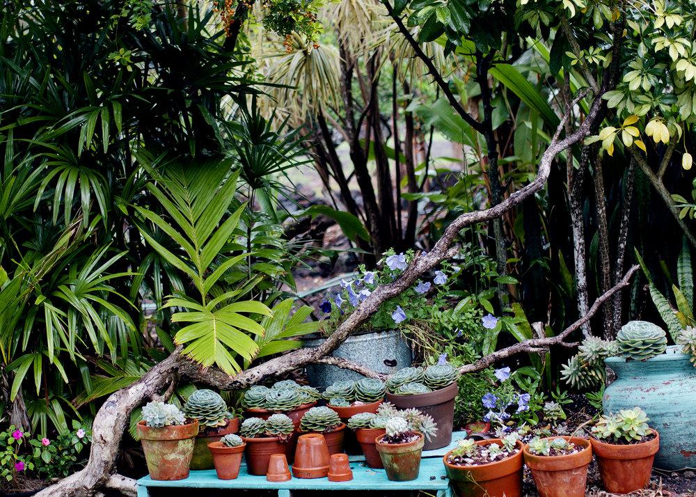 Hawaii052.jpg