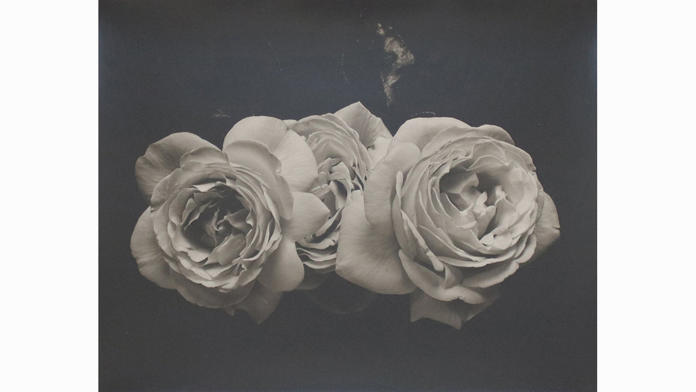 THREE ROSES, UNFRAMED £600