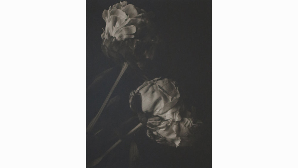 TWO PEONY BUDS, UNFRAMED £600