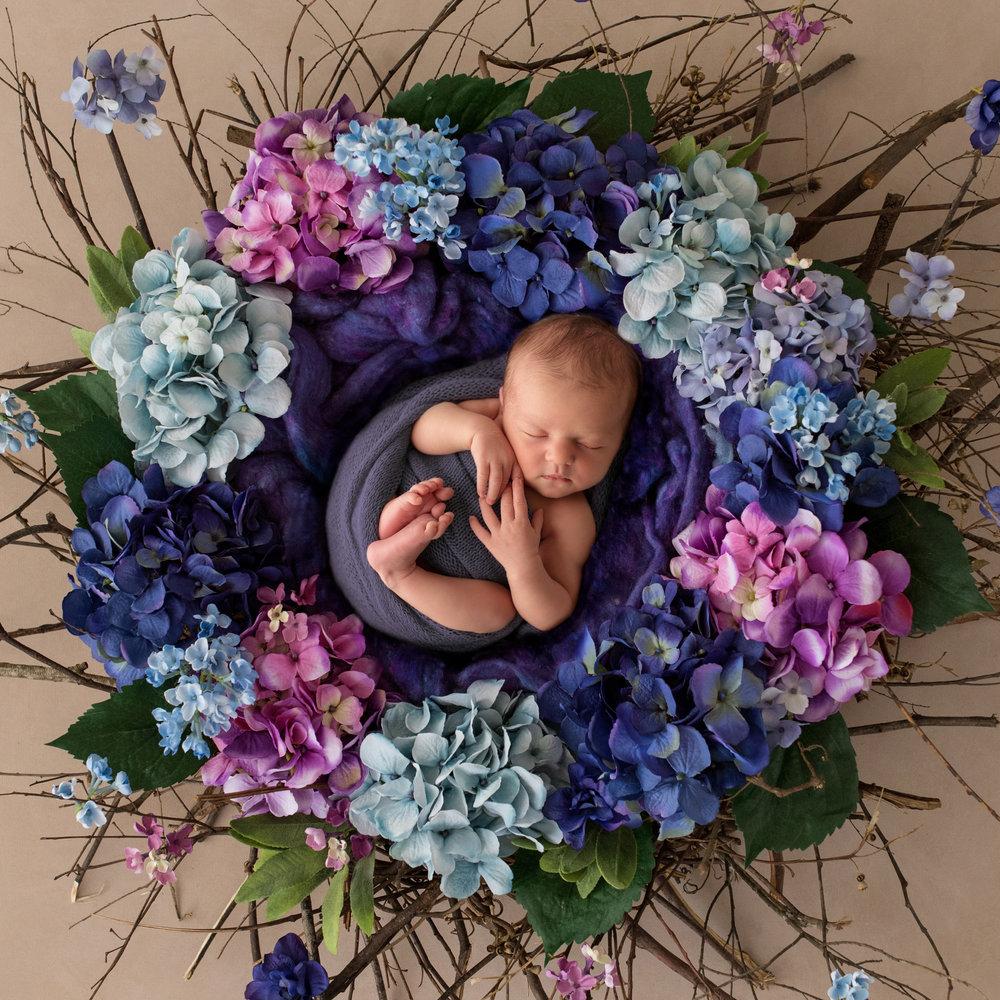 Karen Kimmins Newborn Photography..jpg