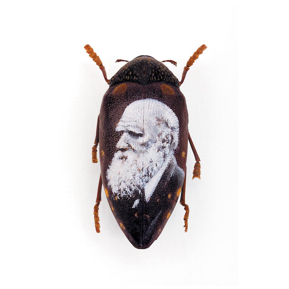 Darwin - 2005