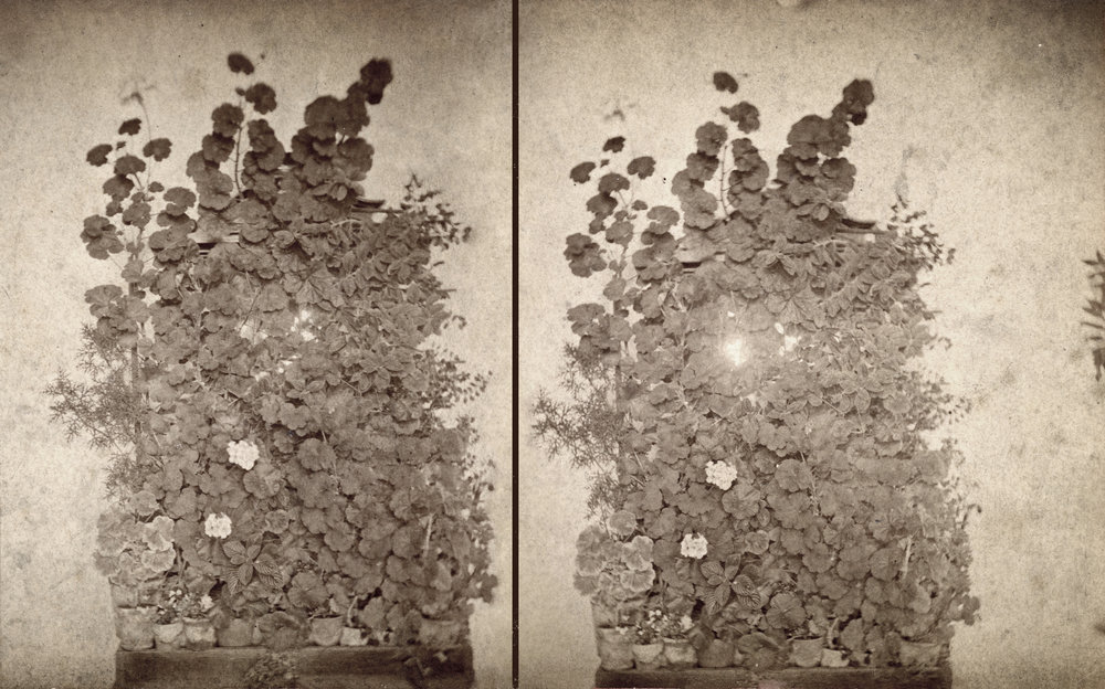 Found homemade stereoscope card. Reworked, enlarged and printed.