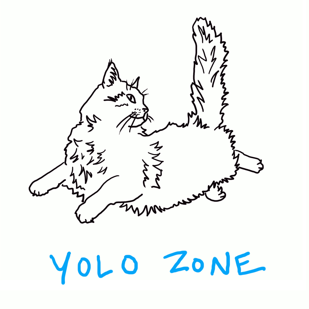 cat_yolozone.jpg