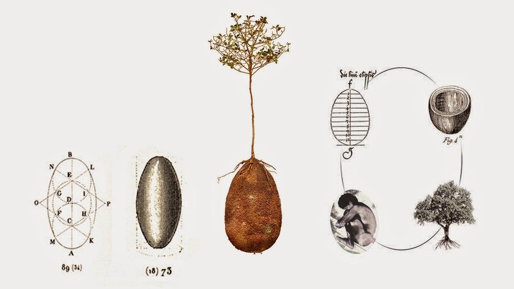 BURIAL PODS A Green Beauty Magazine - Capsula mundi burial pods