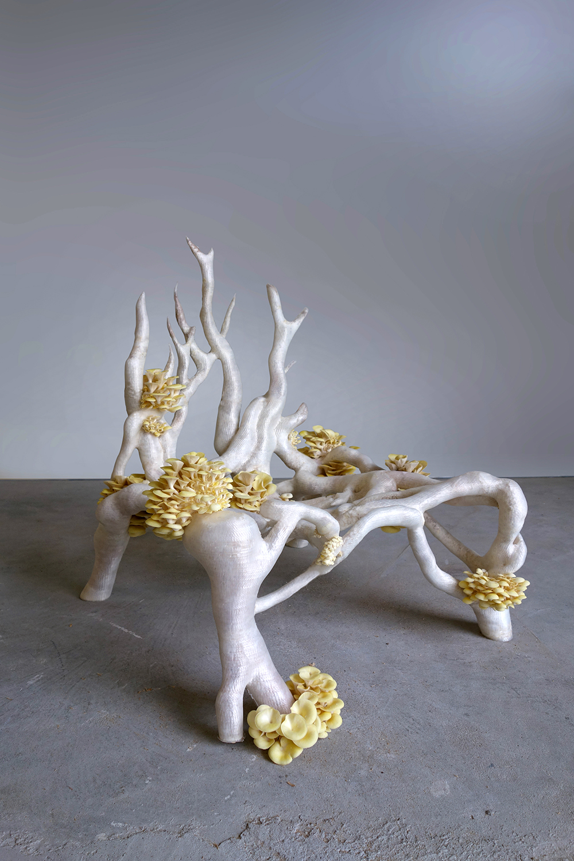 MyceliumChairEKLARENBEEK03-3.jpg