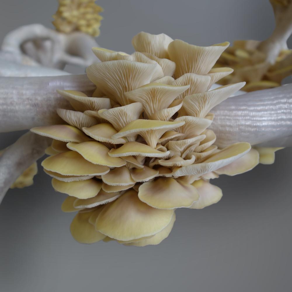 MyceliumChairEKLARENBEEK01.jpg